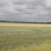 Feld am Oderbruchbahnradweg
