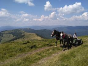 Auch das Pferd ist eine adäquate Alternative zu Berg...