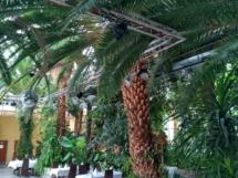 Eine der größten Palmen Polens! Publikumsmagnet par Excellence!