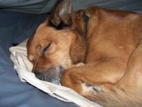 Schlaf gut, Sancho, Schlaf gut.