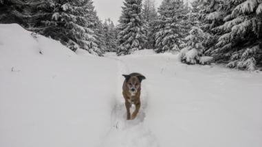 ...den verschneiten Märchenwäldern Böhmens...