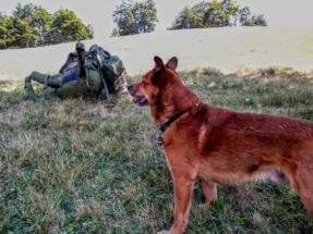 Ein Hund, ein Berg, ein Rucksack hieß es fortan.
