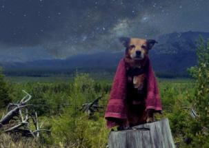 Der beste Reisepartner der gesamten Galaxis